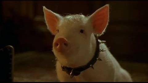 Babe Pig in the City - thank the pig