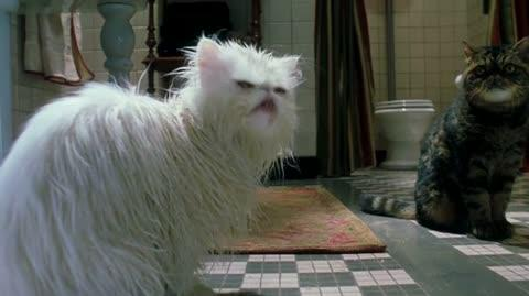 Cats & Dogs - Mr. Tinkles' bath