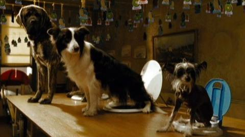 Hotel For Dogs (2009) - Open-ended Trailer (e43279)