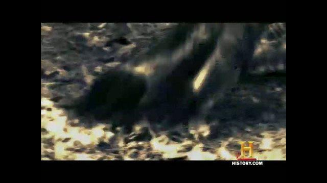 Jurassic Fight Club TV Trailer - Teaser