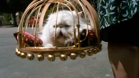 Cats & Dogs - Mr Trinkles fate