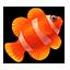 Clownfish-0
