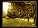 Etin orchard