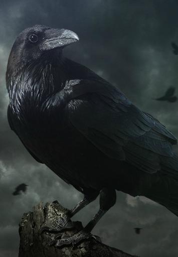 Raven Vikings Wiki Fandom Powered By Wikia