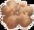 Lichen symbol
