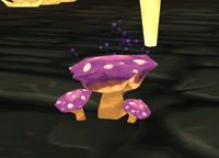 Vernunftkappen Pilze in Zuflucht