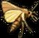 Insekt schwarzerArmeemesserwurm