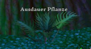 Ausdauerpflanze