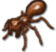 Insekt maricopaErnteameise