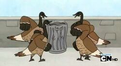 Regular show-a bunch of full grown geese 0017
