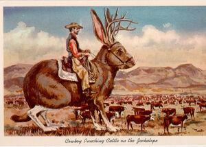 Jackalope-cowboy