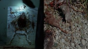 Rats-walking-dead-spoilers-lizzie-to-kill-again
