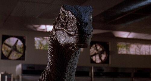 Velociraptor-03