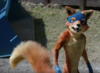 Swiper from 2019 Film