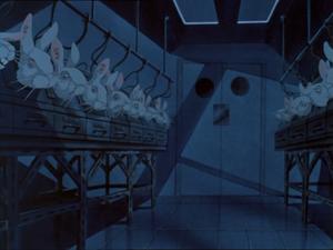 Lab rabbits