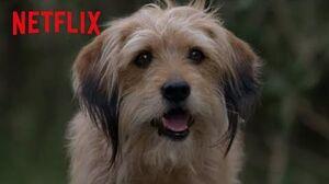 Benji's Clever Plan Benji Netflix