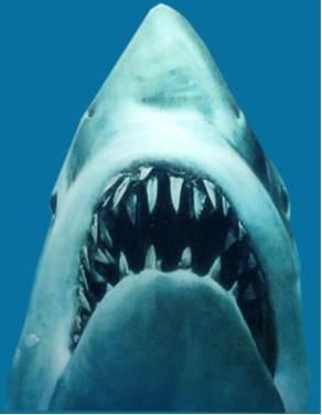 Image result for jaws shark images