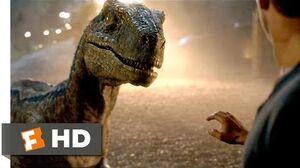 Jurassic World Fallen Kingdom (2018) - Goodbye, Blue Scene (9 10) Movieclips