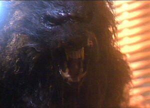 Eddie in werewolf form