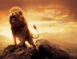 Lions-Wallpaper-1