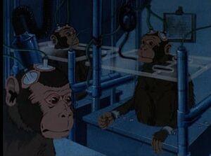 Lab monkeys