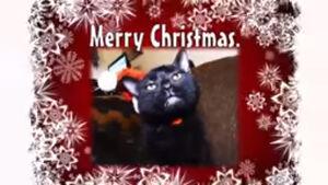 Sylvester christmas photo