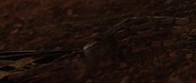 Vader limb