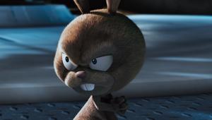 Boingo the bunny