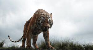 Shere Khan Lose Mowgli