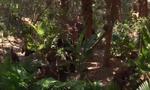 JungleBookBandits