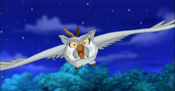 Owl Stellaluna attacks