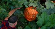 Pumpkin-monster