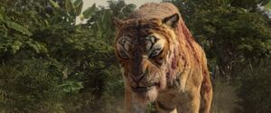 Shere Khan Injury