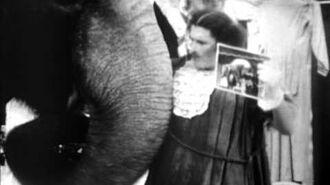 Elephant Bonsai