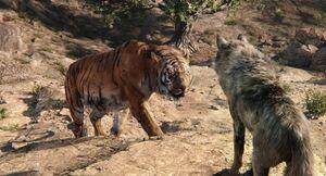 Shere Khan Confronts Akela