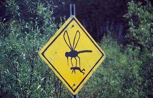 Giant bug-1-