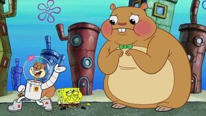 Sandy cuddle spongebob