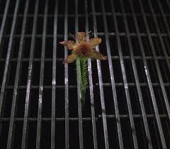 Jeff's flower