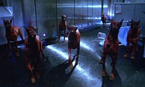Mutant dogs