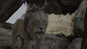Lion King 2019 Screenshot 0245