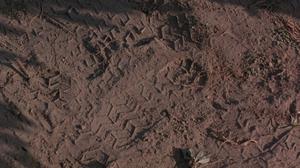 Abdullah's tracks