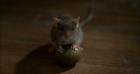 Mouse (Mousehunt)