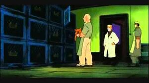 Felidae - Lab Experiments