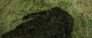 Ditchwater Sal bodyprint