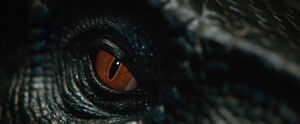 Indoraptor's Eye