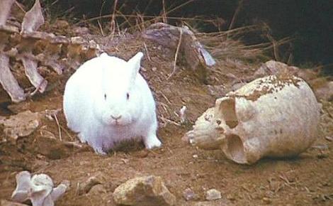 File:The Rabbit of Caerbannog.jpg