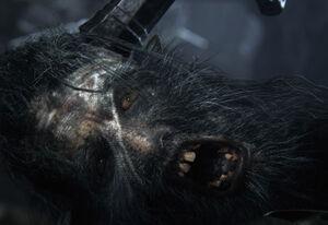 Huntsmen Bloodborne Face Eye