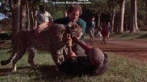 Cheetah- Abdullah's defeat
