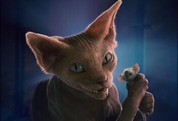KittyGalore CA2