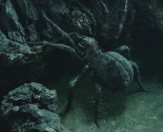 Shelob fighting